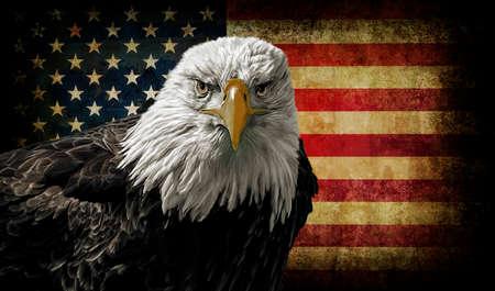 hawks: Pittura a olio di un maestoso Bald Eagle contro una foto di una battaglia afflitto bandiera americana. Archivio Fotografico