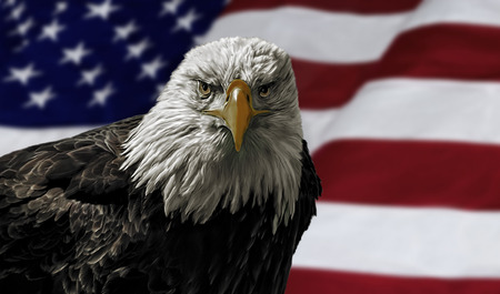 Oil painting of a majestic Bald Eagle against a photo of an American Flag. photo