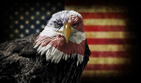 aguila americana: Pintura al �leo de una majestuosa �guila calva con la bandera de EE.UU. a trav�s de ella