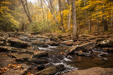 west virginia: A beautifful forest streaml in West Virginia  during autumnal colors.