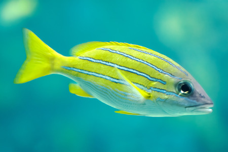 colorful fish: A colorful tropical fish.