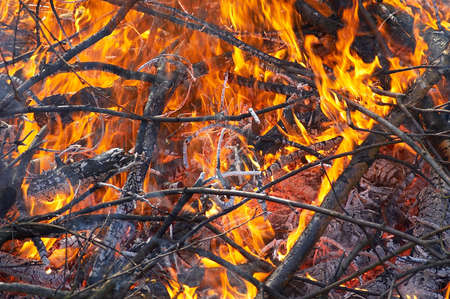 logs in campfire or conflagration of the forest photo