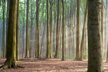 Sunny morning in an early autumn forest; sun rays are visible in a light haze. photo