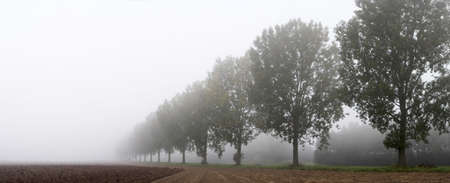 Panoramic - row of trees on the field egde in the mist