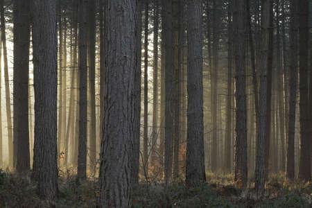 Misty winter trees lit by setting sun Stock Photo - 725388