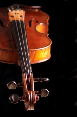 violine  on the black background