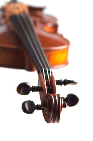 violine head close-up on the white background