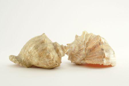 two shells3