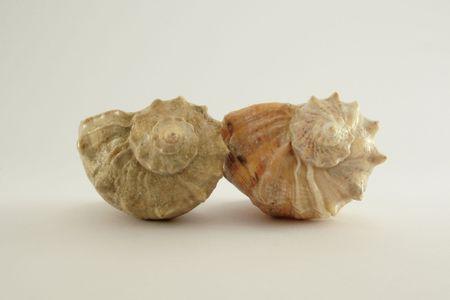 two shells 2