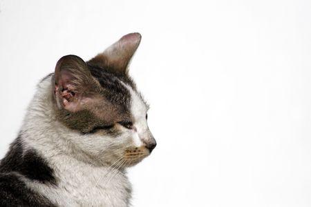 cat-profile