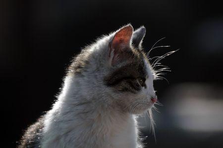 cat- profile 2 Stock Photo
