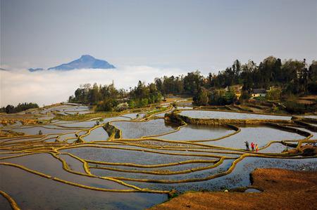 terraced: Terraced fields in Yuanyang, Yunnan