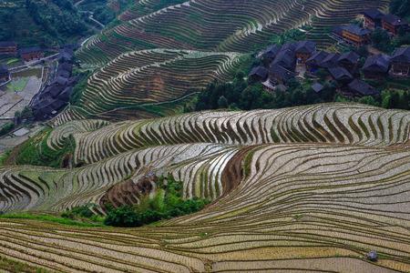 Terraces field in Guangxi, China