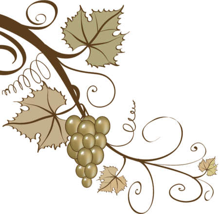 leaves vector: Grapes