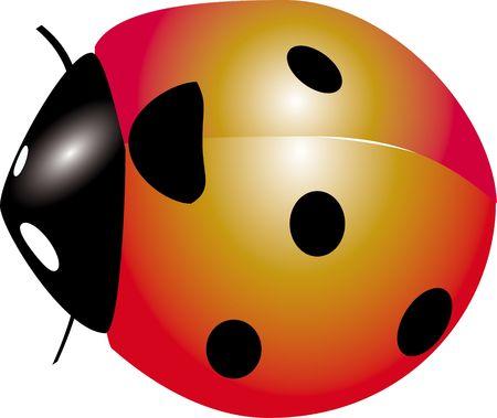 crawlies: Ladybug insect