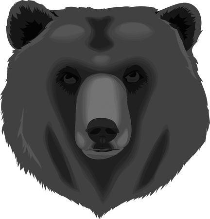 bear paw: Black Bear Stock Photo