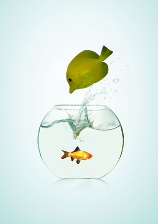 Yellow fish jumping in a tank photo