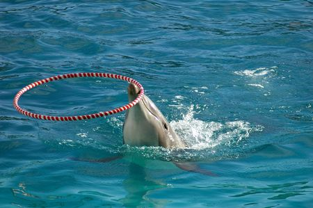 porpoise: Dolphin playing