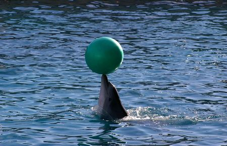porpoise: Dolphin playing with a ball