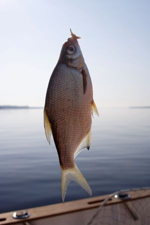 a raw bream on a hook Stock Photo