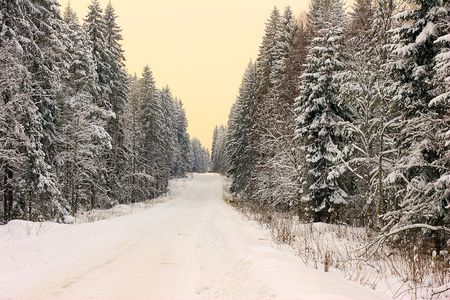 The winter road in forest Stock Photo