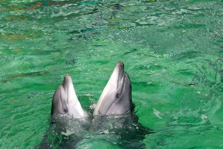 dolphinarium: The two dancing dolphins in dolphinarium