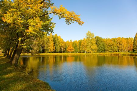 the autumn landscape with yellow tree and small pond Stock Photo