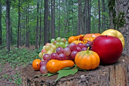 A lot of fruits on a trunk of tree. Stock Photo - 1979884
