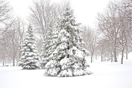 clearing the path: snowy winter tree. Stock Photo