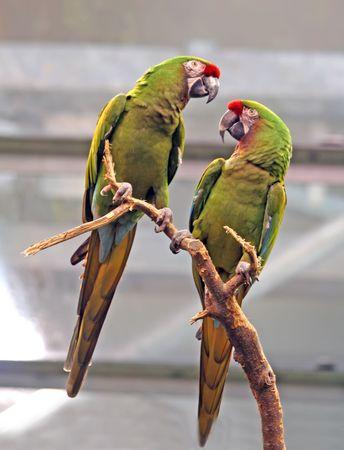 noises: Love birds.