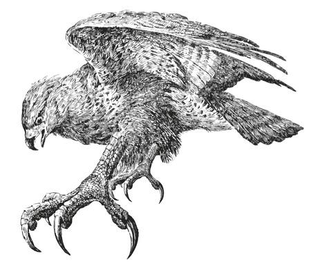 kel:  Bird powerful Abstract.