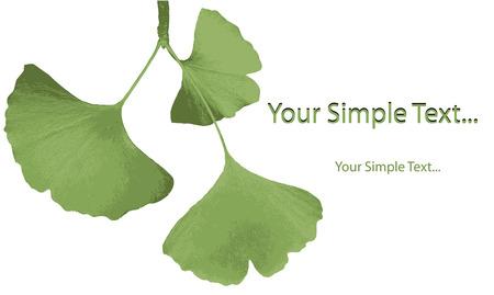 gingko: Ginkgo biloba leaf. Vector.