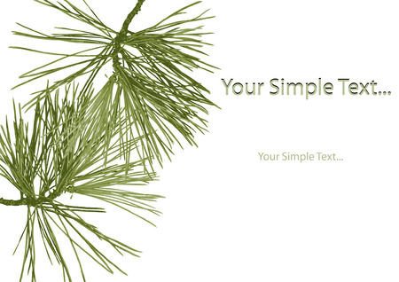 saturated color: Needles Fir and place your text. Vector. Illustration