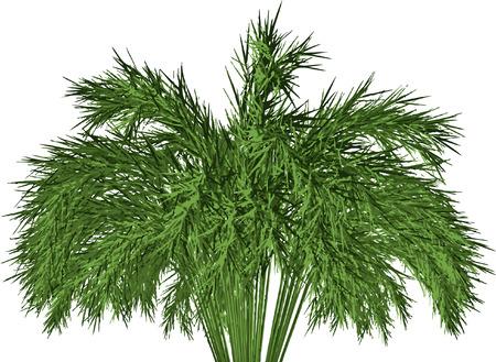 asian gardening: Giant Timber Bamboo: Phyllostachys