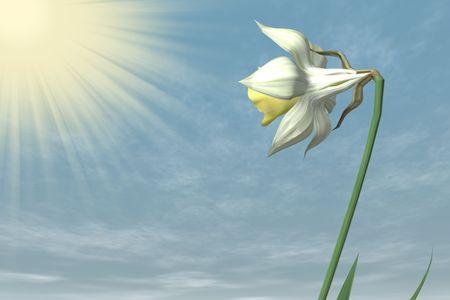 stigma: Spring Flower in the sky.
