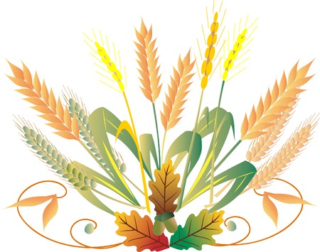Wheat isolated on white background Vector