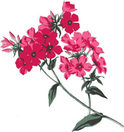 Spring flower. Stock Vector - 4753154