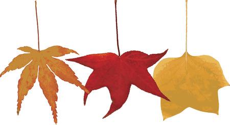 scarlet: Colored leaf of autumn.