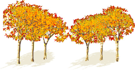 rural scene: Tree autumn on white background. Illustration