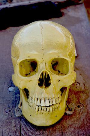 Human skull. photo