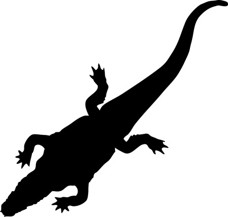 One crocodile isolated one white background. Vector