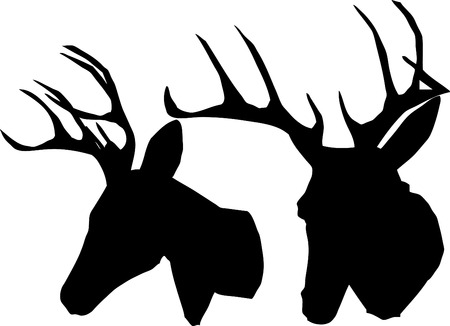 roe deer: Two antler trophy. Illustration