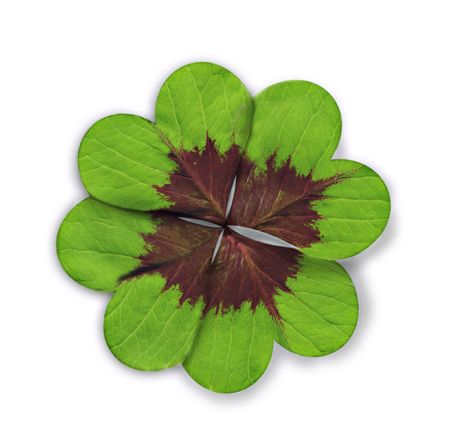 Four-leaved clover heart shape. photo