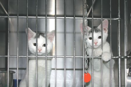 animal shelter: Kitties which want to be adopted