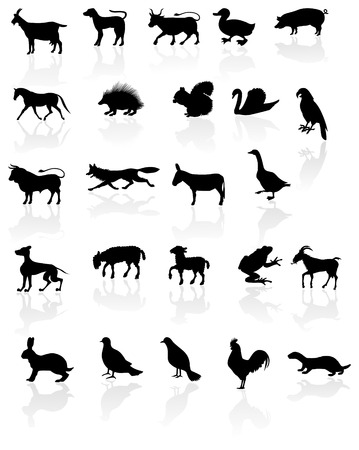 Animals with reflection on white background. Vector