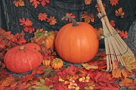 gourds: Autumn scene .