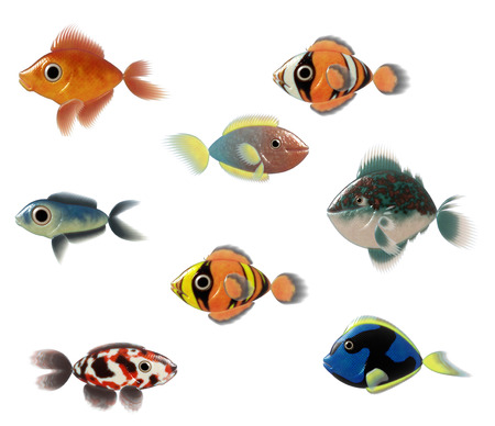 Exotic Fishes  photo