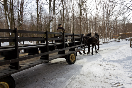 horse drawn carriage: Horse and carriage.