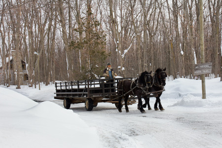 horse drawn: Horse and carriage.