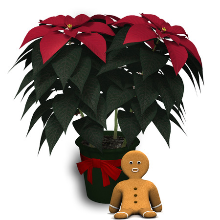 gingerbread: Poinsettia and Gingerbread.